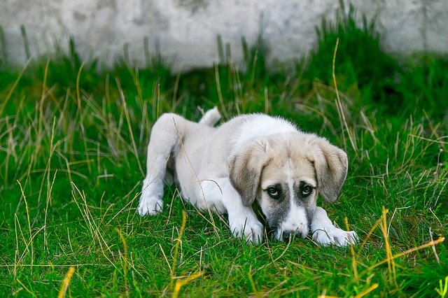 What To Do If Your Dog Tests Positive For Lyme Disease