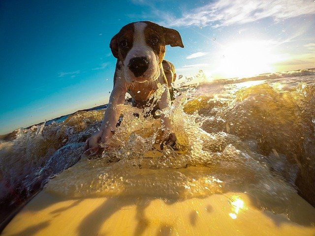 How to Keep You Pet Healthy During Summer Travels