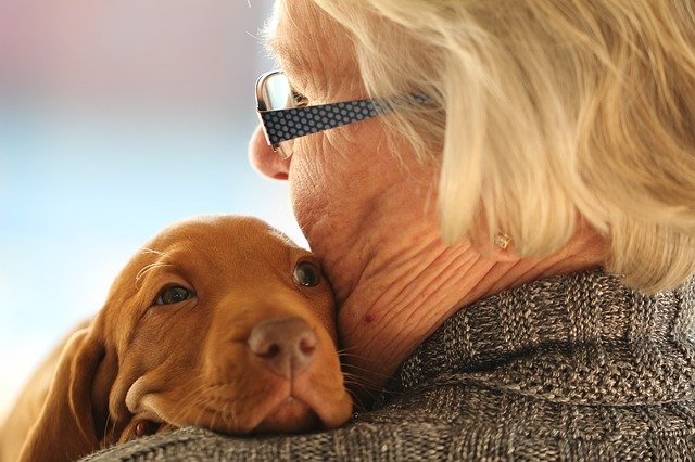 Do Dogs Really Age Seven Times Faster Than Humans?