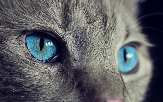 Common Eye Problems Among Cats and Dogs